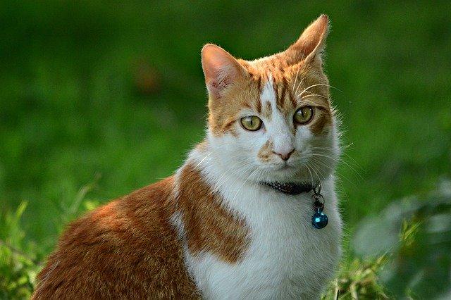 cuidar gato sin generar residuos