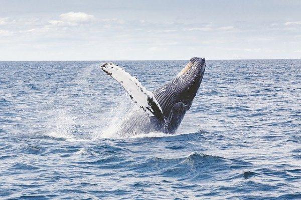 ¿30 años son suficientes para recuperar la vida marina?