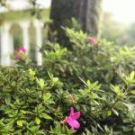 plantas balcon verde