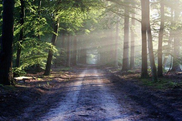 Reconecta con la naturaleza desde el salón de tu casa