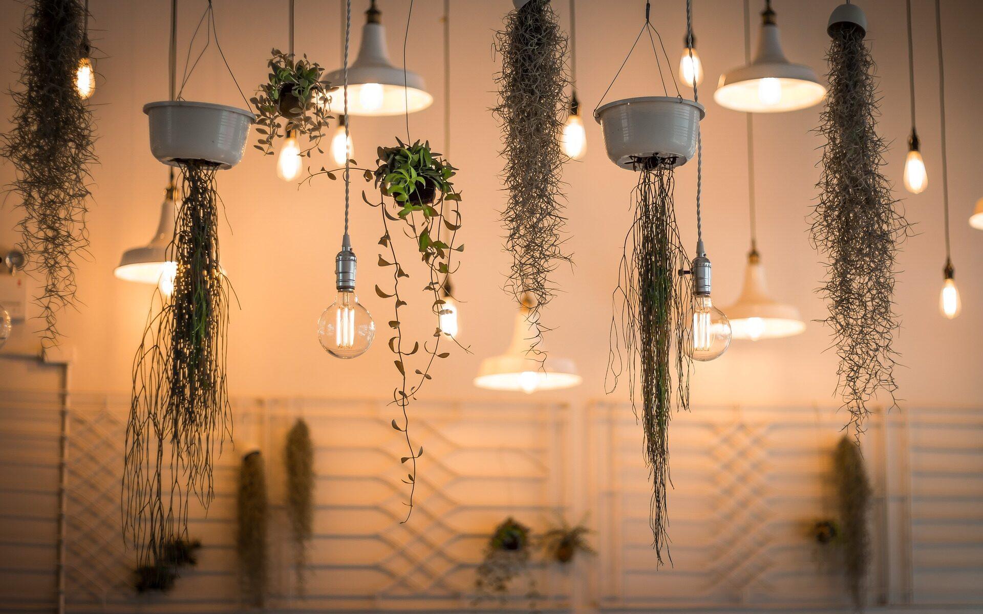 Decoración plantas interior I fuente: Pixabay