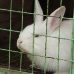 Conejo enjaulado