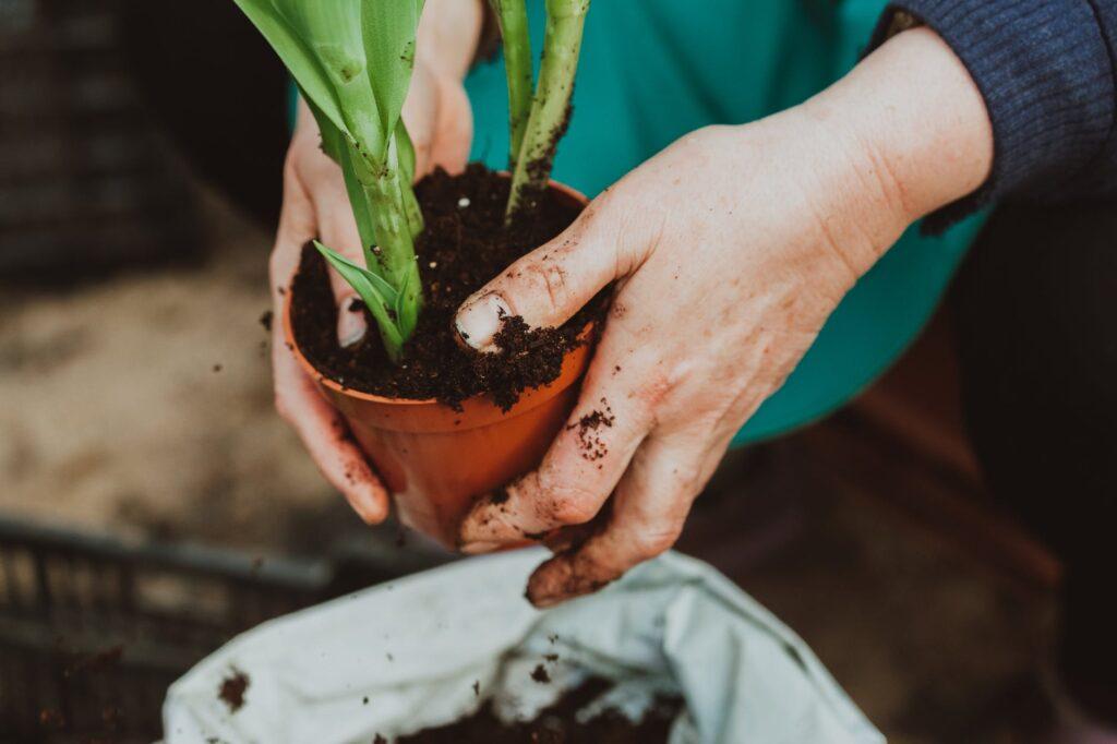reconocer plantas